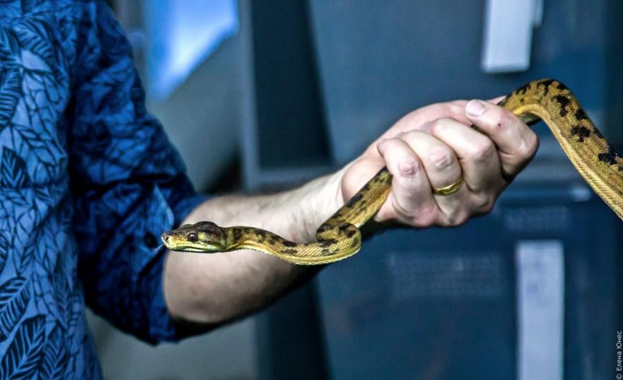 змейки (64 of 67)
