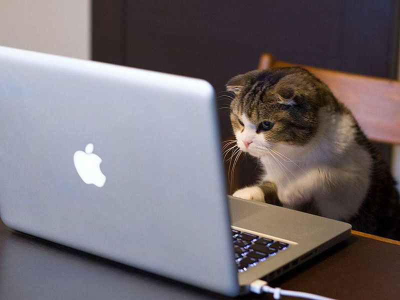 cat_with_laptop