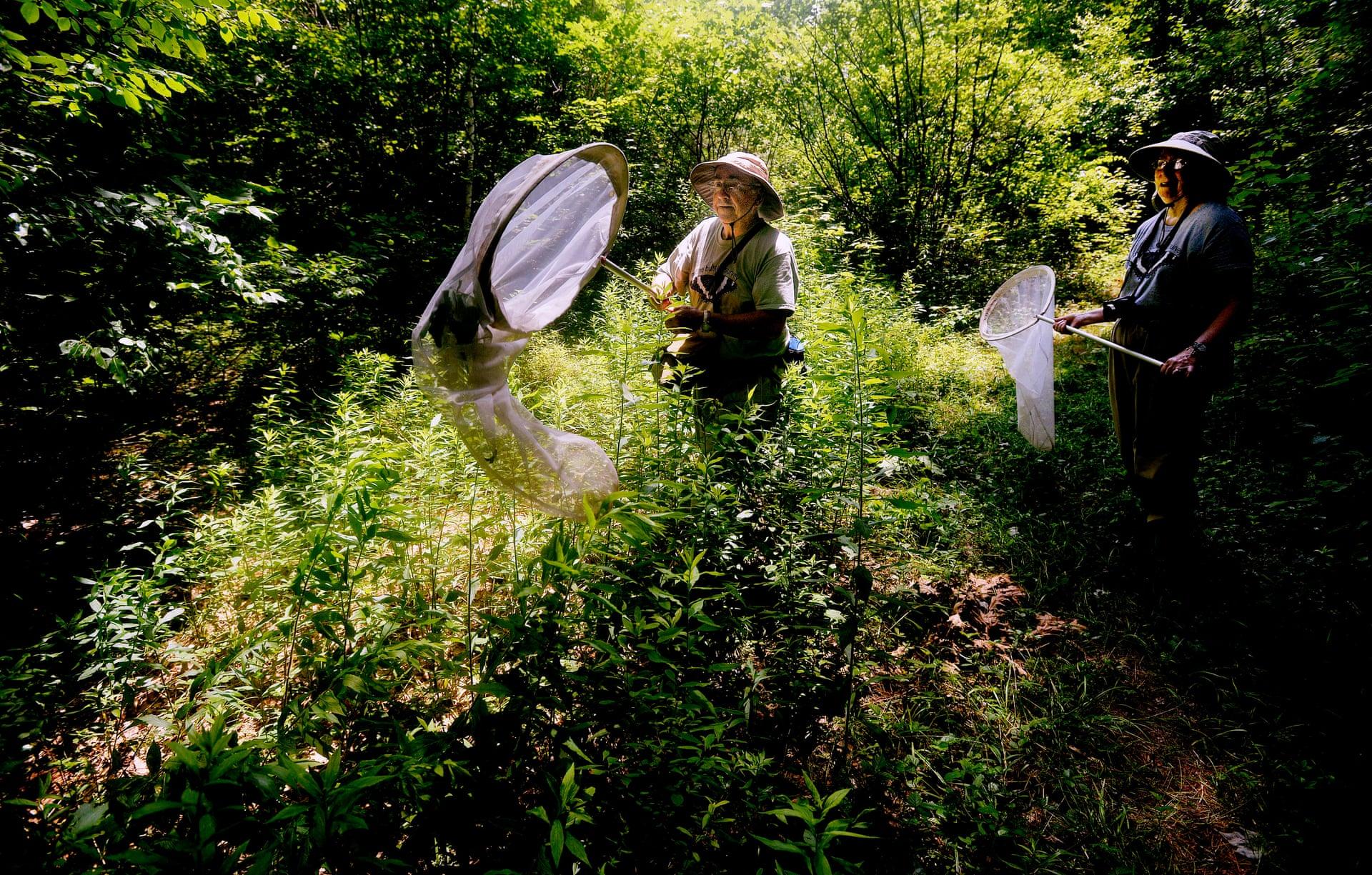 Обследование бабочек в штате Мэн, США. Фото: Шон Патрик Уэльетт / Getty Images.