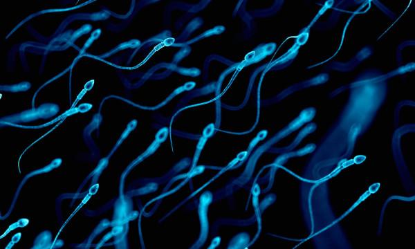 Женское тело, как считают ученые, блокирует слабую сперму