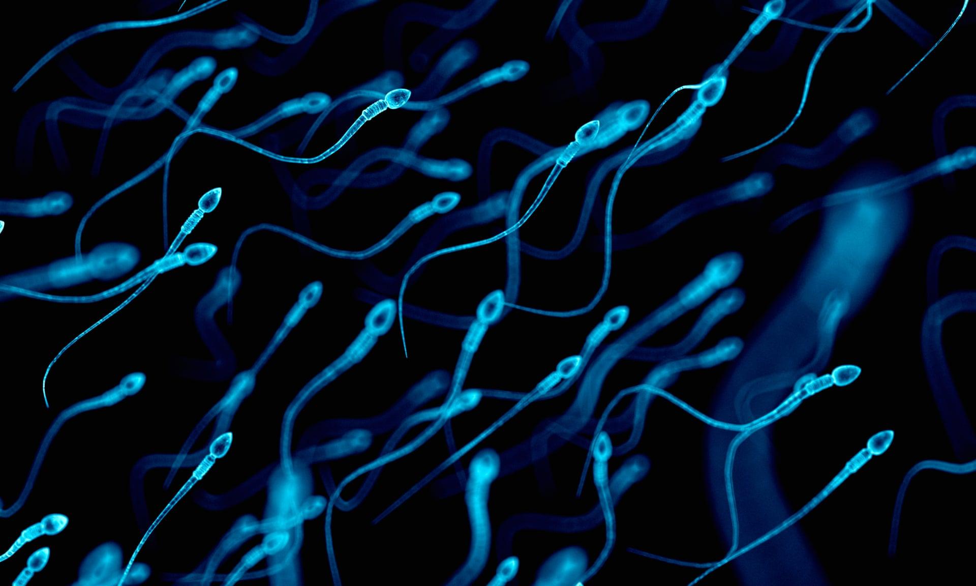 Испытания сперматозоидов у мужчин и быков показали, что более слабые сперматозоиды попали под встречные потоки. Фото: Себастьян Каулитцкий / Getty Images / Научная фотобиблиотека РФ.