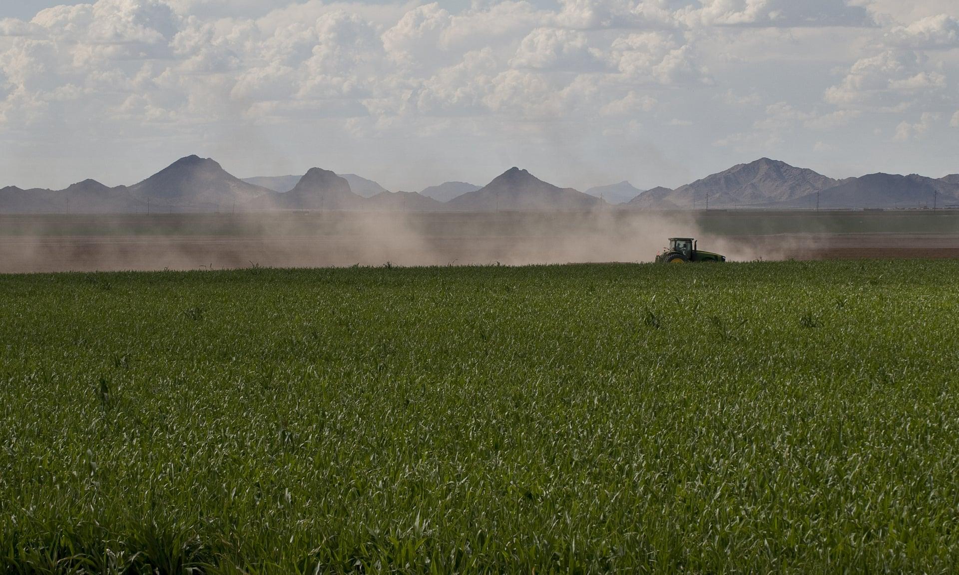 Хотя мир производит больше продуктов питания, чем в прошлом, он делает ставку на постоянно растущие монокультуры. Фото: ZUMA / REX / Shutterstock.
