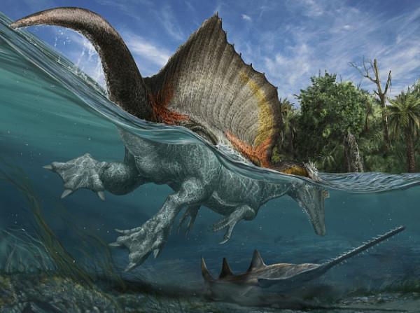 Древние хищные динозавры могли плавать