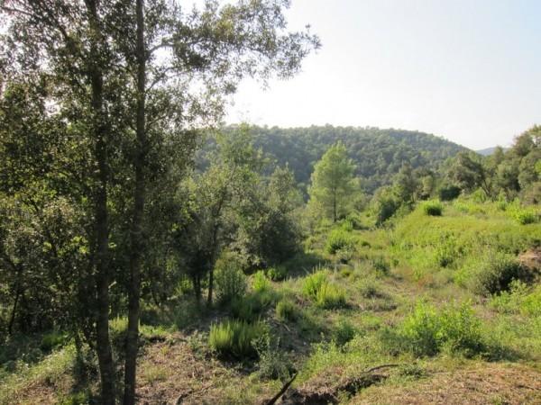 Провинция Жирона. Виды (1)