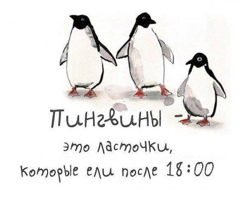 пингвины - это ласточки