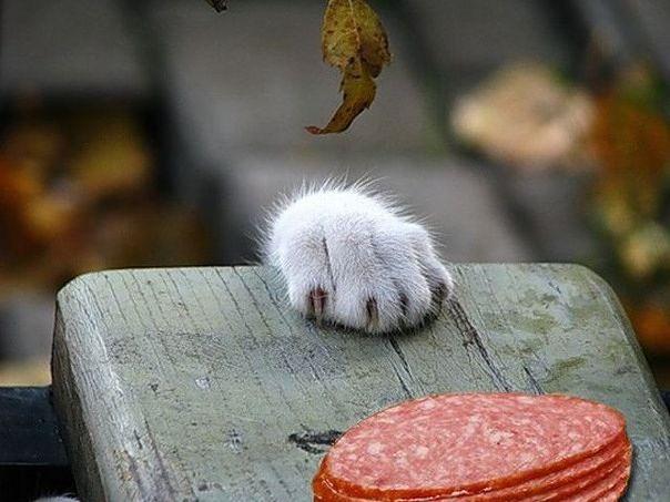 чья колбаса