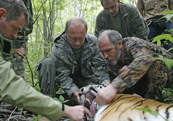Путин и тигрица