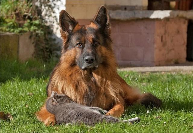 кошка с собакой2