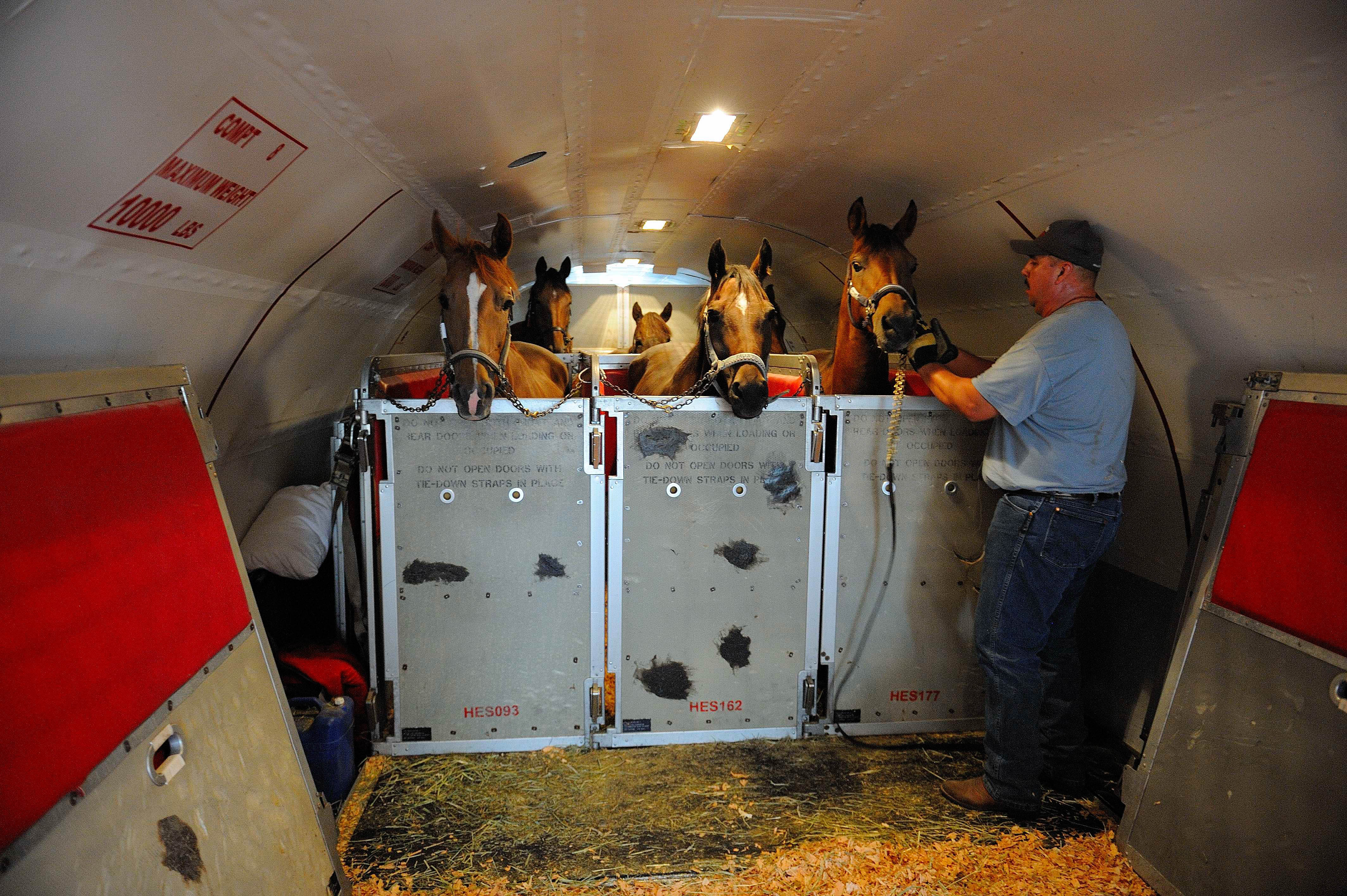 Horses-flying-on-the-727-200-equipped-with-stalls-and-dubbed-Air-Horse-One-courtesy-Blue-Grass-Airport.jpg