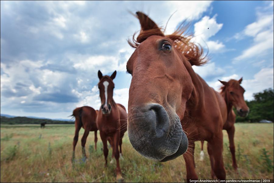 Почему казахи едят лошадей