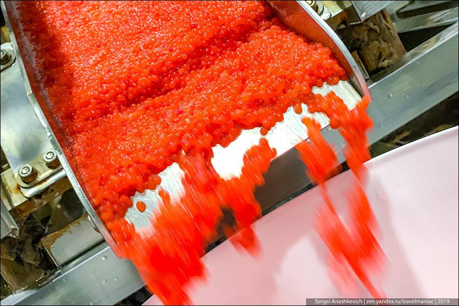 Красная икра вёдрами: как на Камчатке делают главный русский деликатес