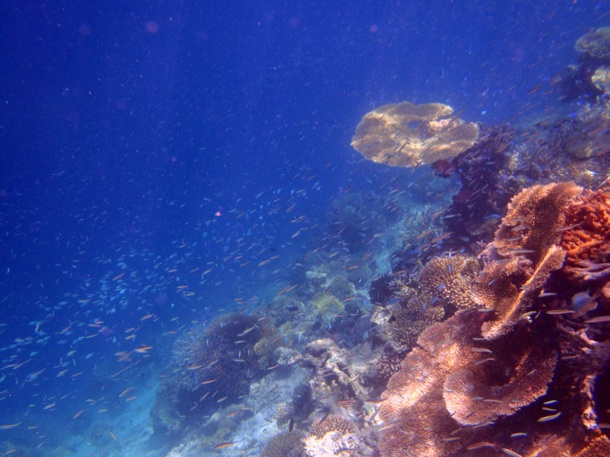 снорк на дальнем рифе.
