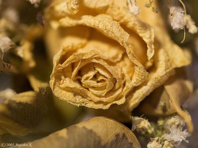 неумирающие розы