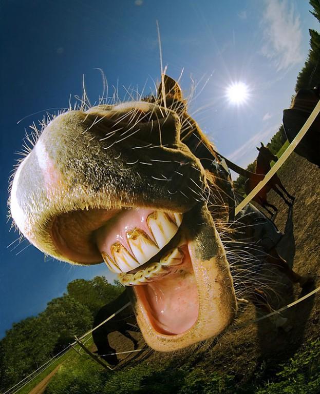 Fishy laugh