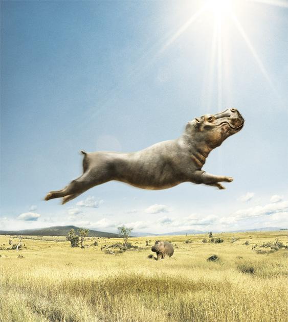 Летающий бегемот