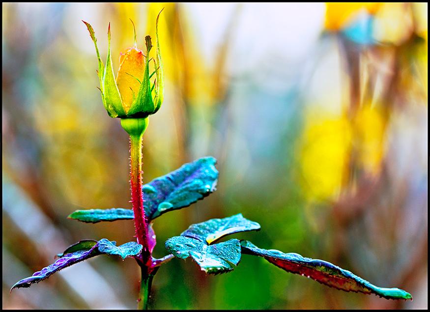 каменный цветочек