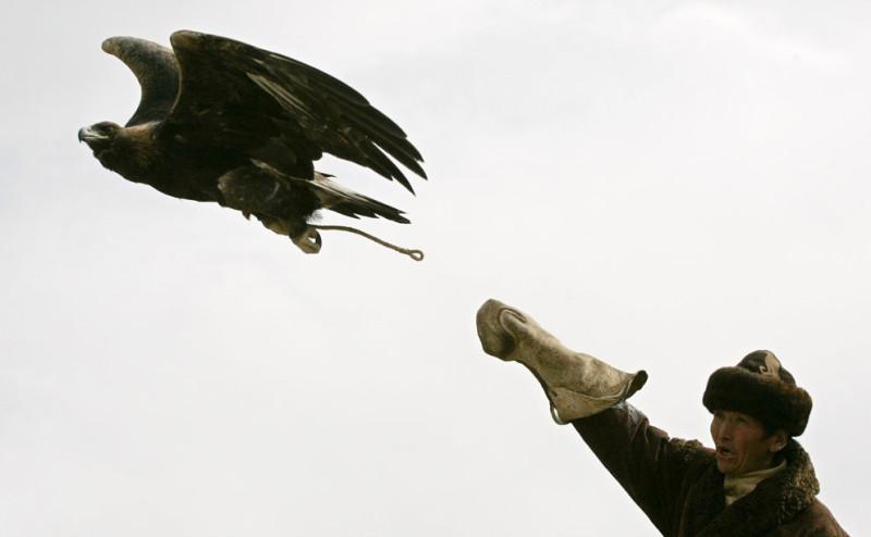 Казахский охотник запускает своего беркута