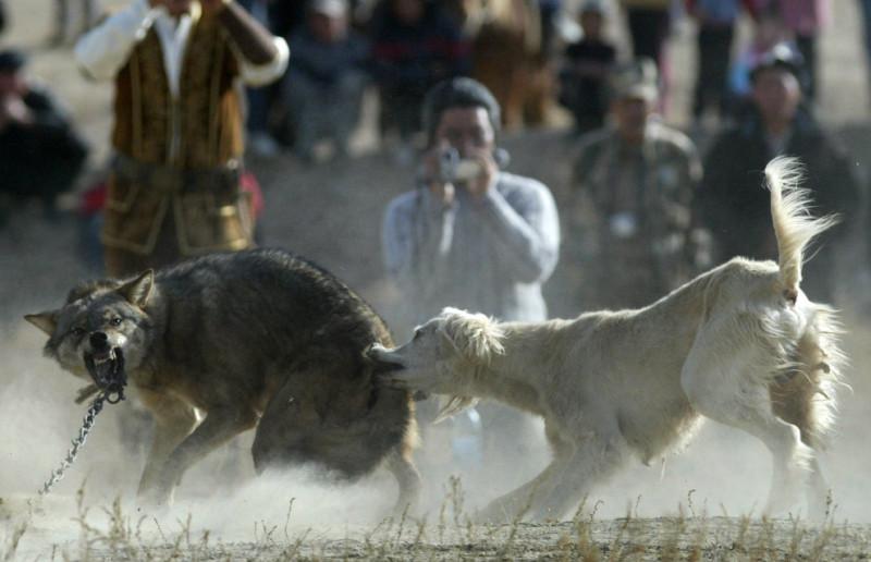 A hunting dog