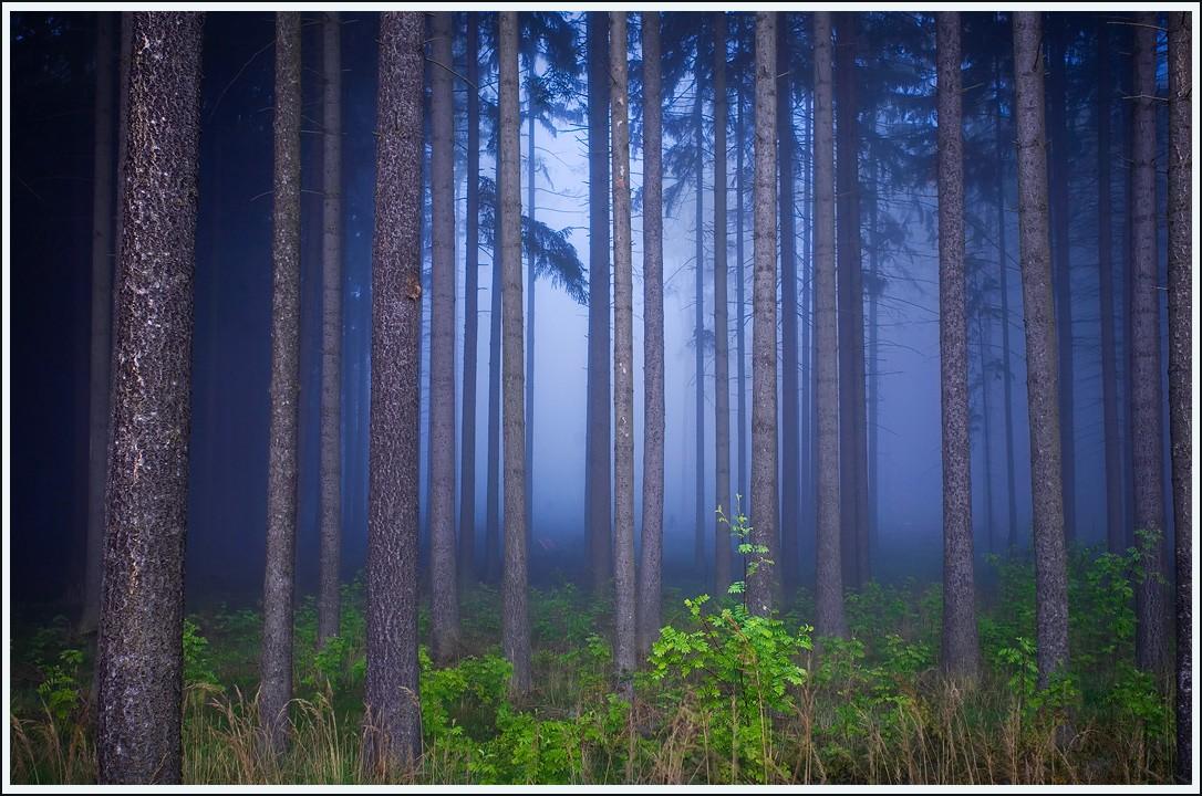 Глубины леса