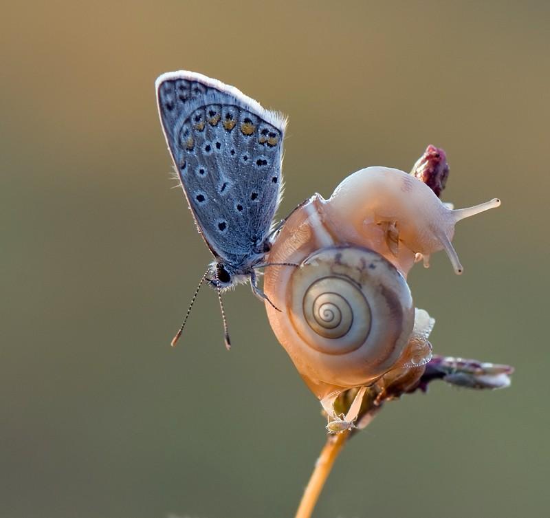 бабочка и улитка
