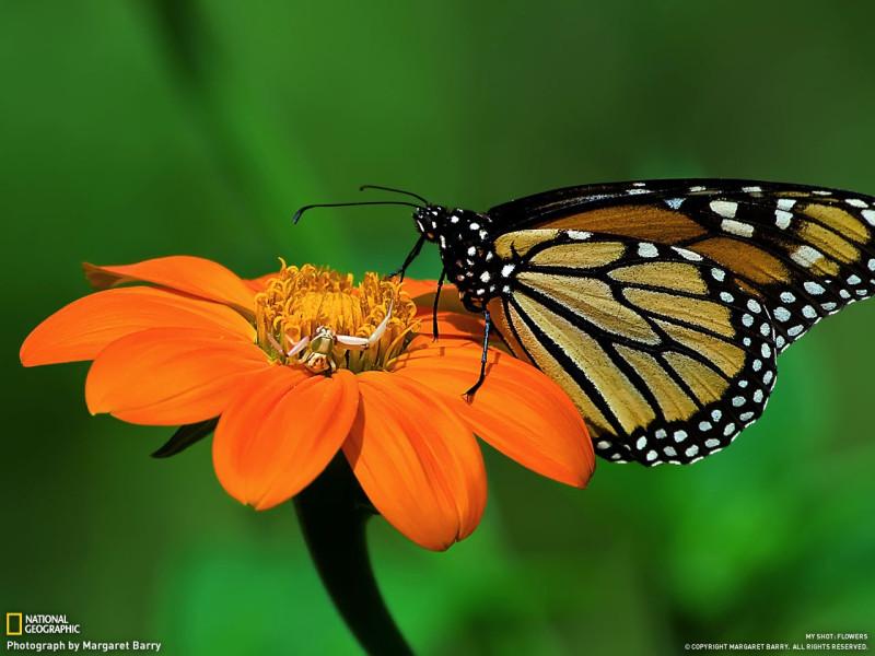 Бабочка, цветочек