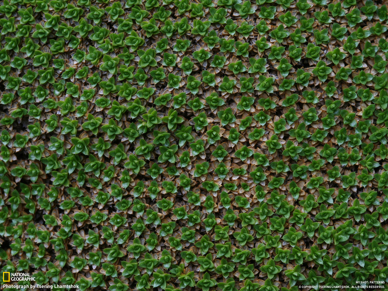 Узоры от National Geographic