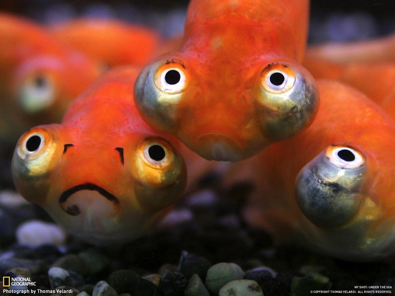 ribki-v-popke