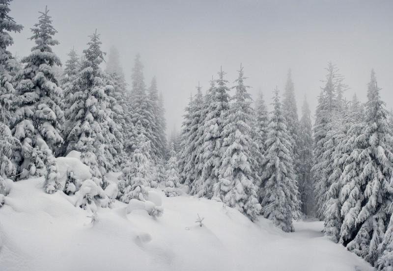 Бал зимних красавиц