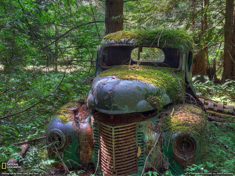 старая машина в лесу