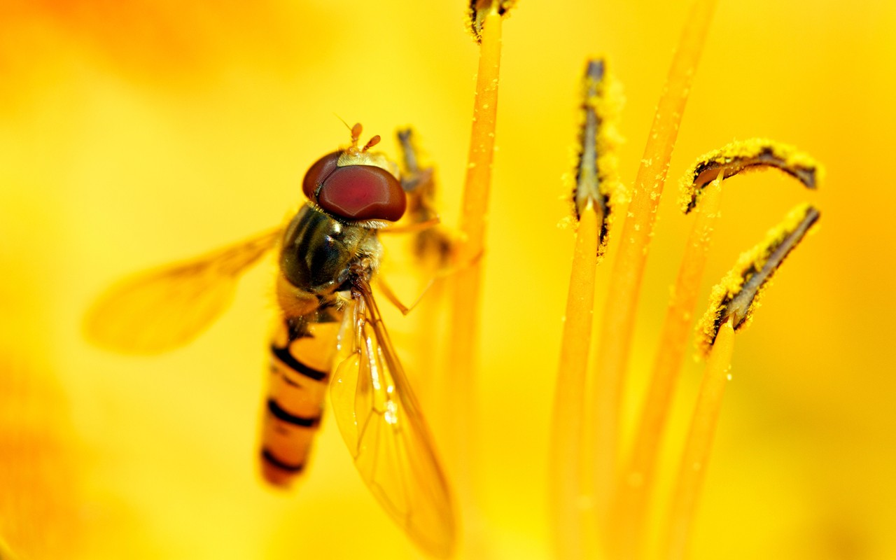 Syrphid's Feast