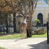 Вена 2019 - Зоопарк