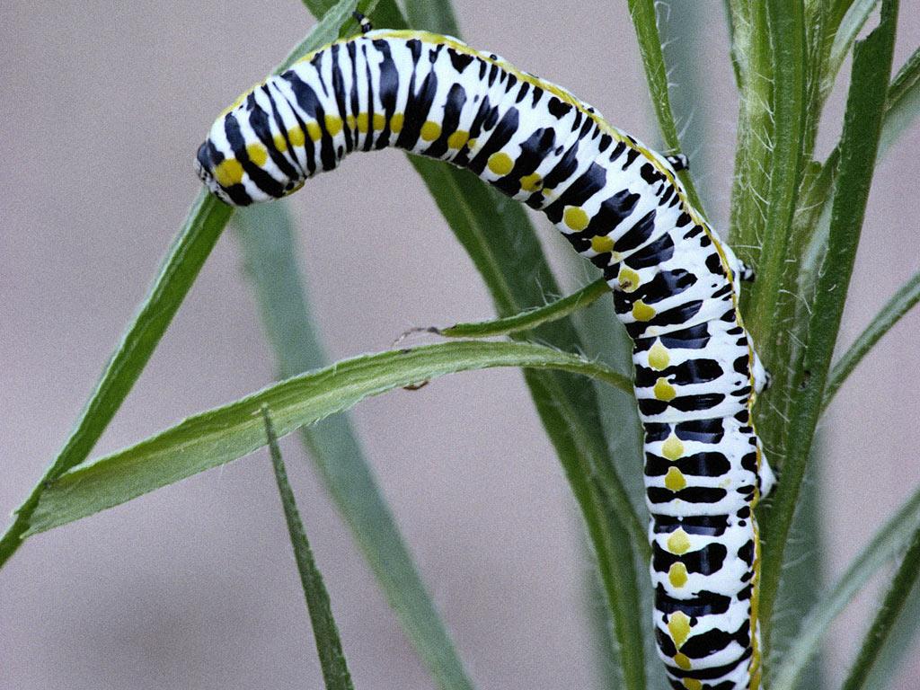 почти бабочка