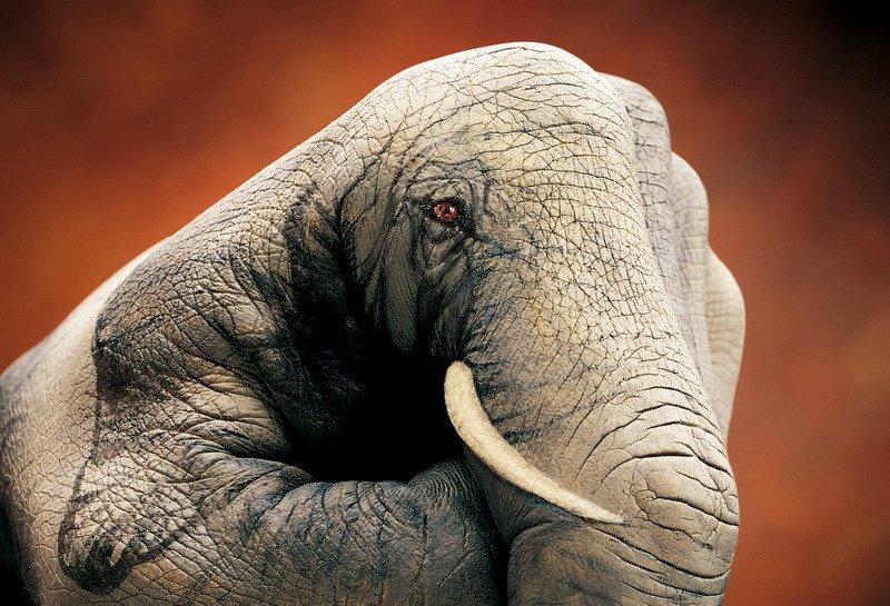 слон из руки