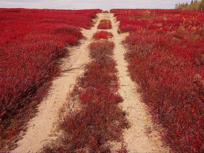 кровавая дорога