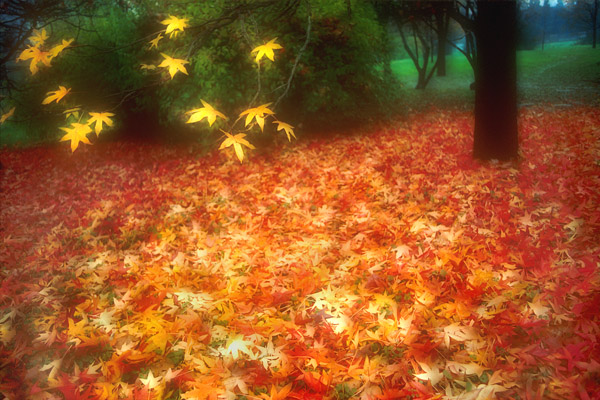 34162832_1224781455_Autumn_soft_leaves