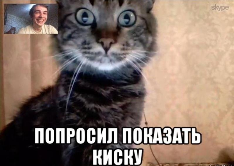 Мая день, смешные картинке в скайпе