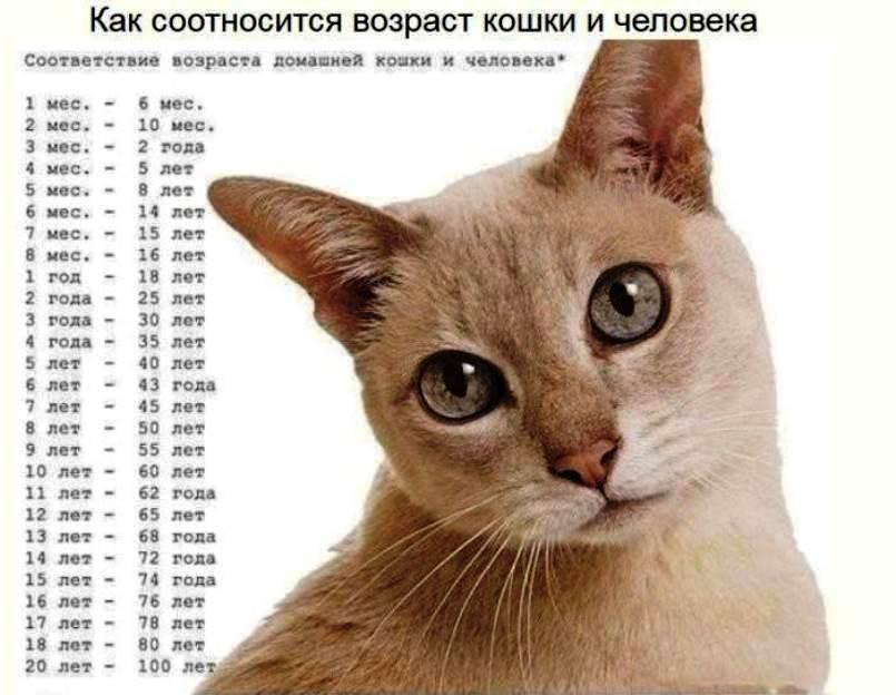 возраст котов