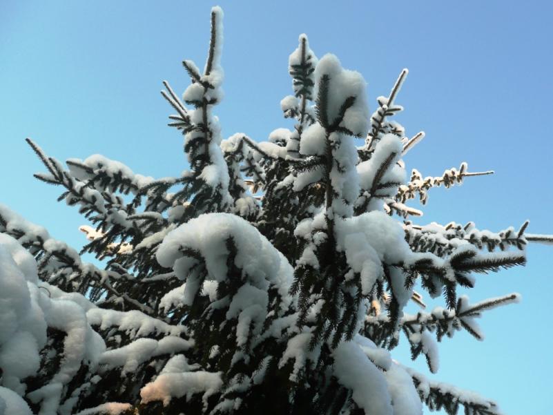 снег солн (2)