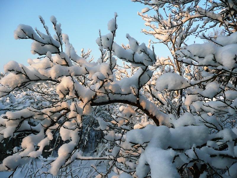 снег солн (3)