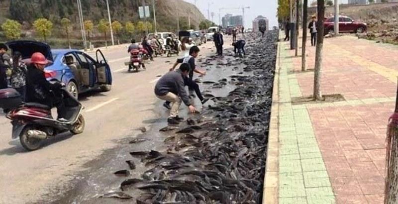 рыба с неба (6)