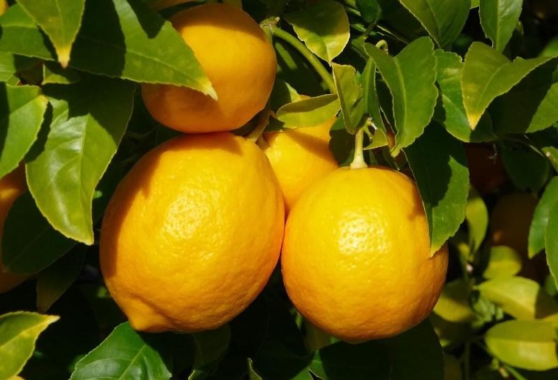 лимон 20
