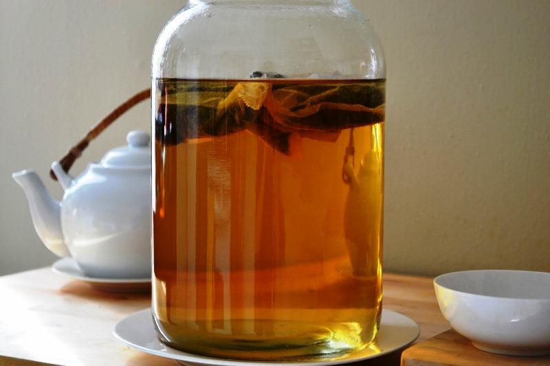чайный гриб (4)