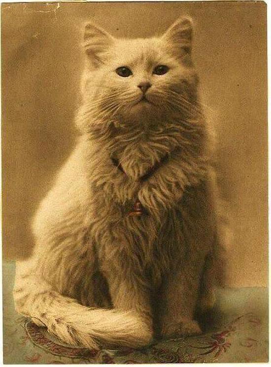 Первая фотография кота