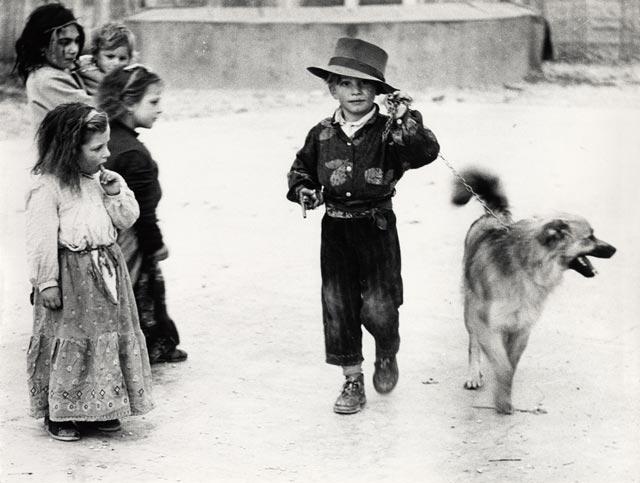Первые фотографии собак