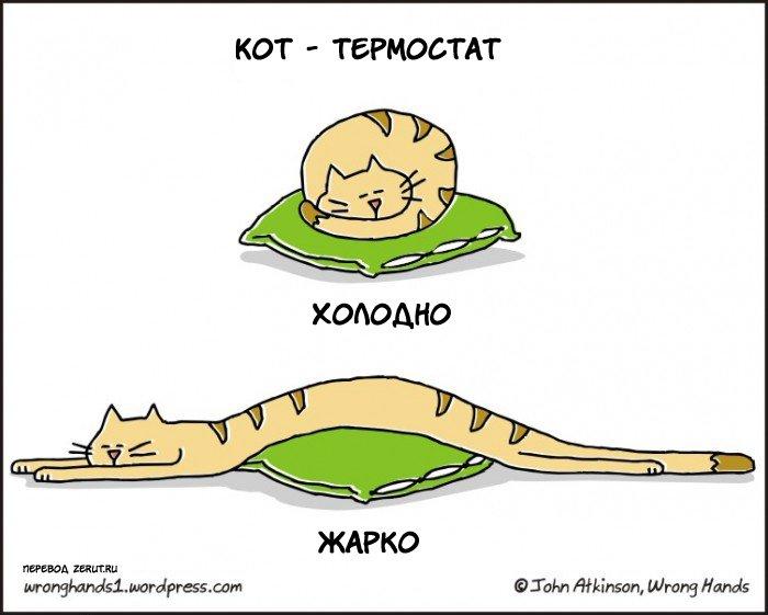 Анекдоты про кошек