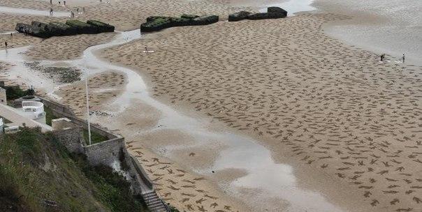 9000 силуэтов павших солдат на пляже города Арроманш-ле-Бена во Франции, сделанные художниками Энди Моссом и Джейми Уордли при участии группы добровольцев