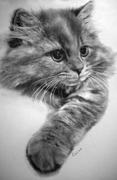 карандашные рисунки Paul Lung