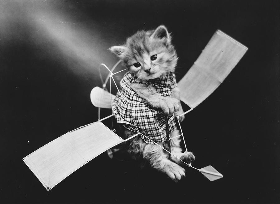 кошки и собаки в костюмах прошлого века