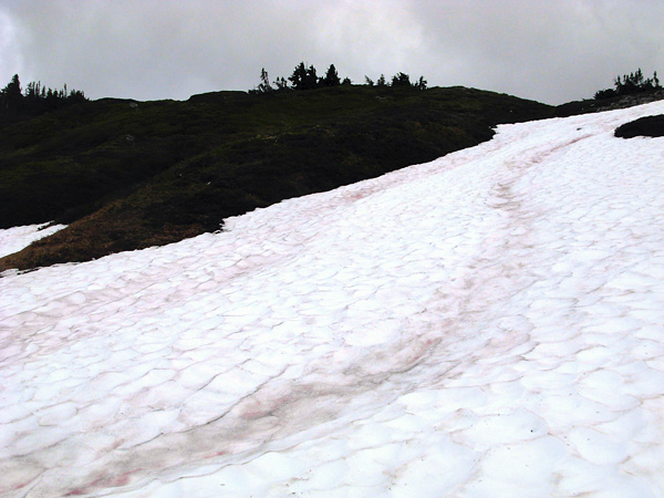 арбузный снег