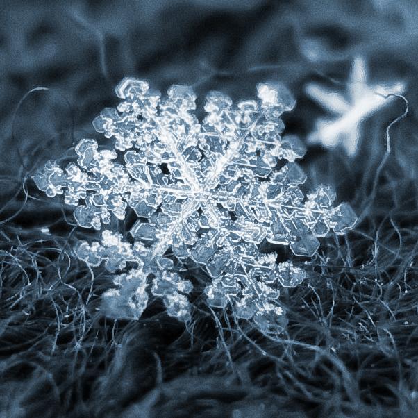 Смотреть фото снежинки прикольные